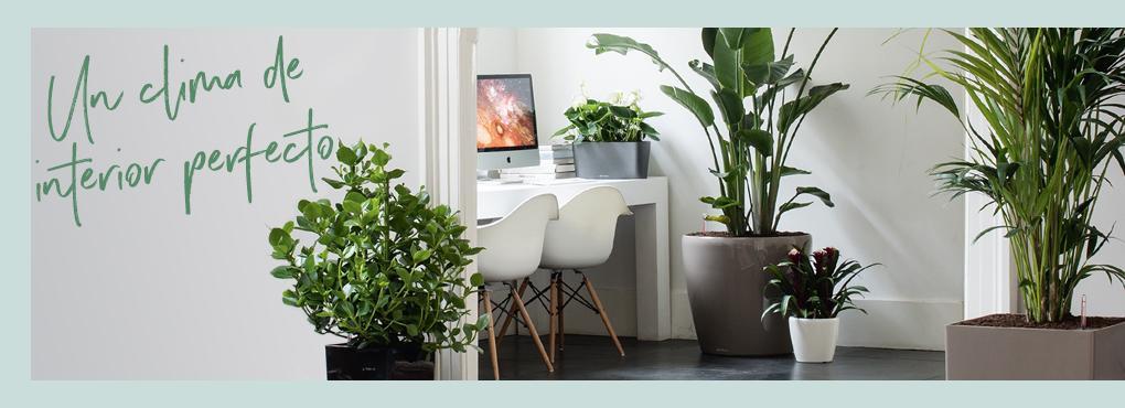 El clima de interior perfecto para un hogar verde