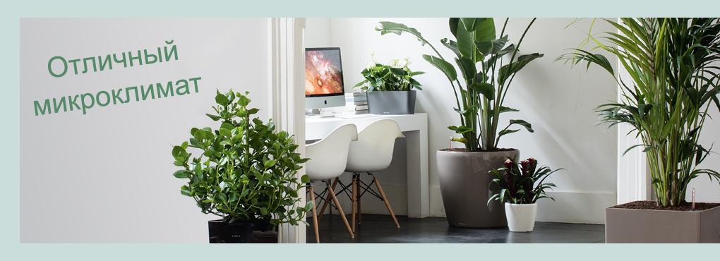 Отличный микроклимат для вашего дома