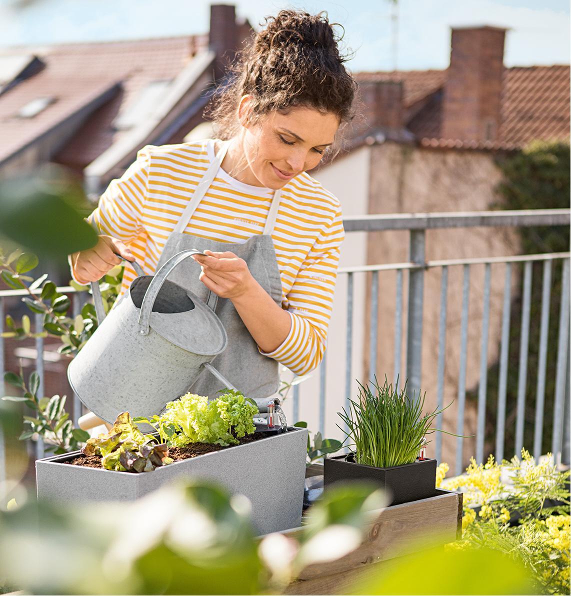 Una donna annaffia la sua insalata piantata