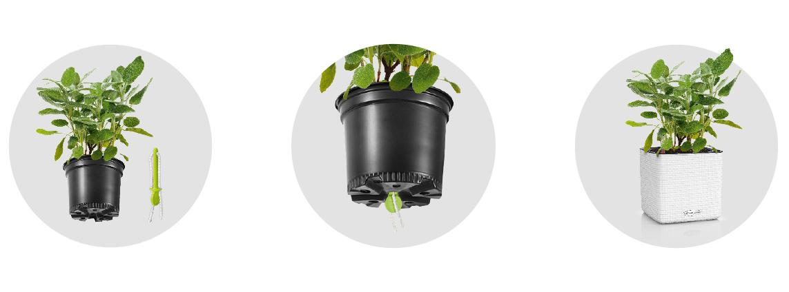 'Wick watering system - plug in