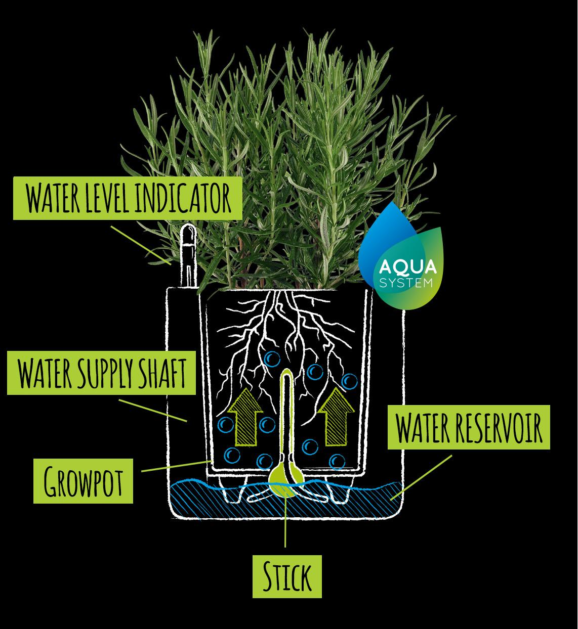 Drawing with explanation of the wick watering system