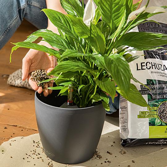 Plant instructies stap 4