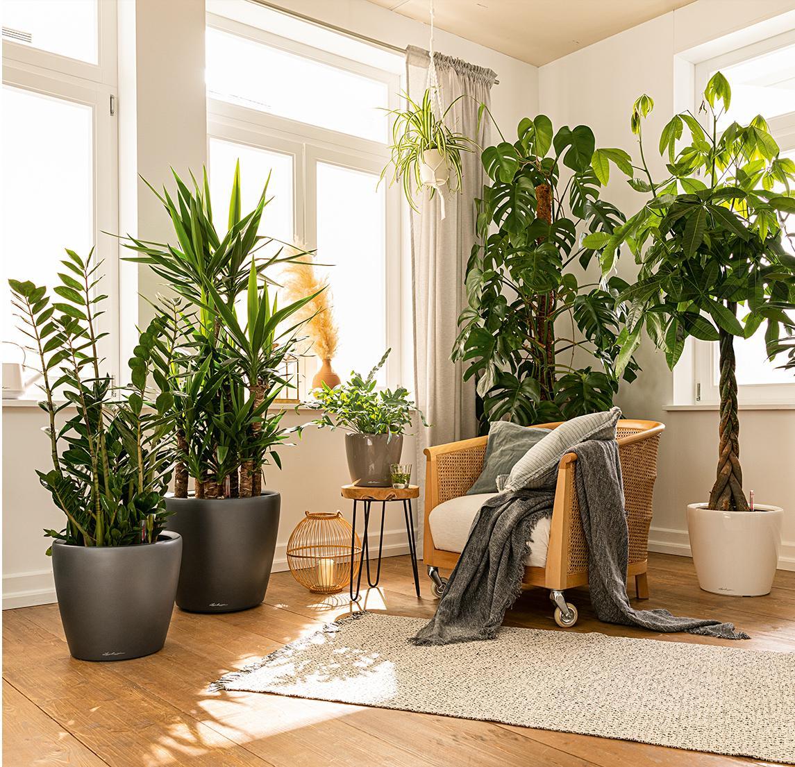 Bepflanzte CLASSICO LS in vielen verschiedenen Größen