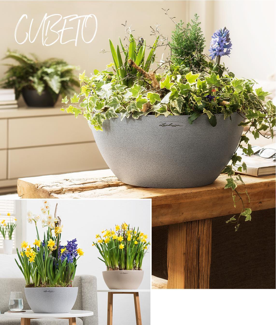 Maceta gris con apariencia de piedra plantada con hermosas flores tempranas como el narciso y el jacinto.