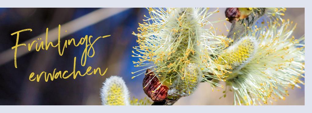 Frische Frühlingsdeko mit LECHUZA