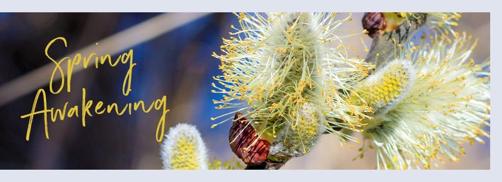 Fresh spring decoration with LECHUZA