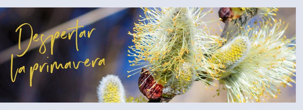 Decoración primaveral con LECHUZA