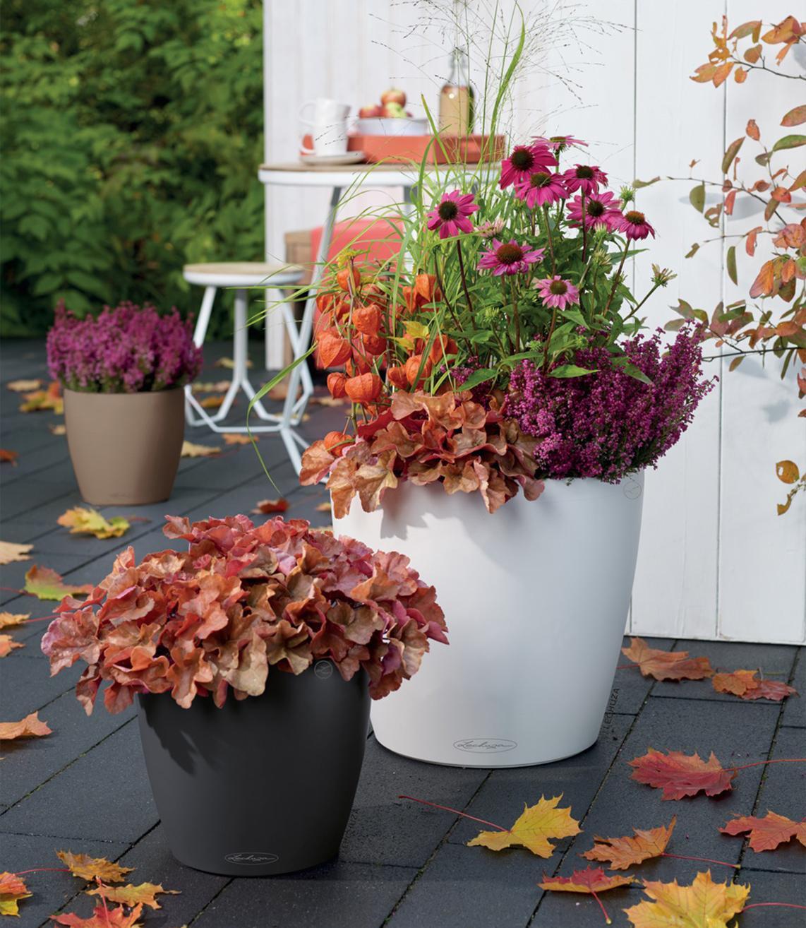 CLASSICO Color 35 und 43 mit Lampionblumen und Winterheide bepflanzt