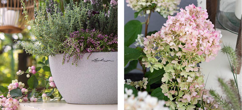 Kräuter und Winterheide in steingrauen CUBETO Color 40 eingepflanzt