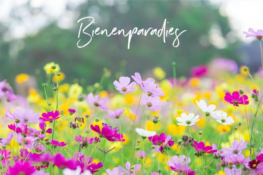 Bienenparadies auf der Blumenwiese