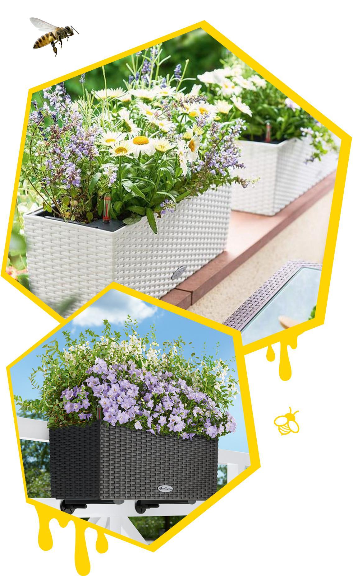 Zwei Bienenwaben mit bepflanzten BALCONERAs und zwei Bienen