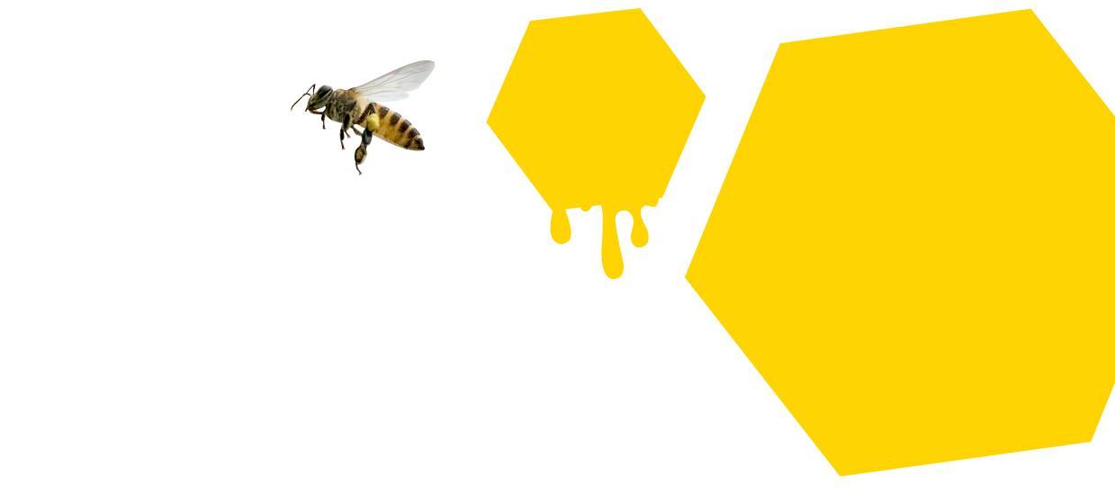 Zwei Waben und Biene