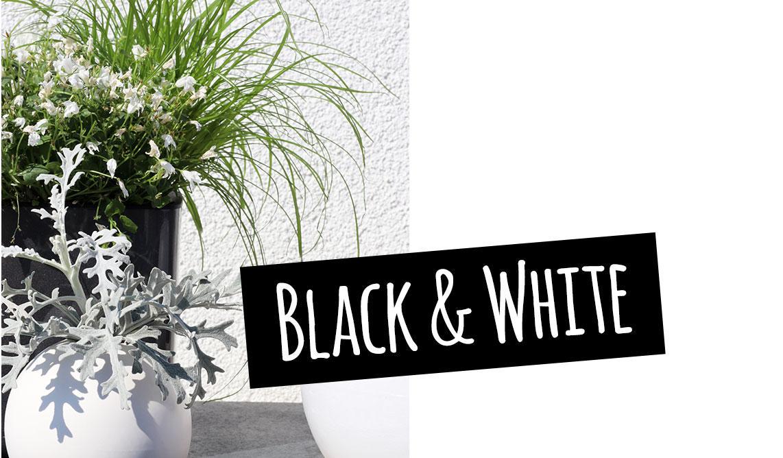 Jarrón blanco delante de una maceta negra de alto brillo: blanco y negro
