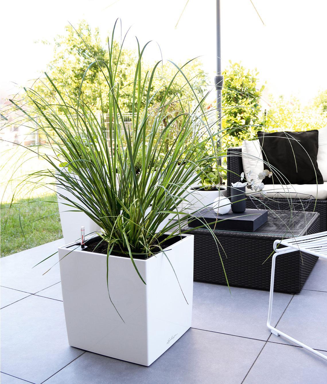 Witte CUBE Premium beplant met hoog groen gras op een donker terras