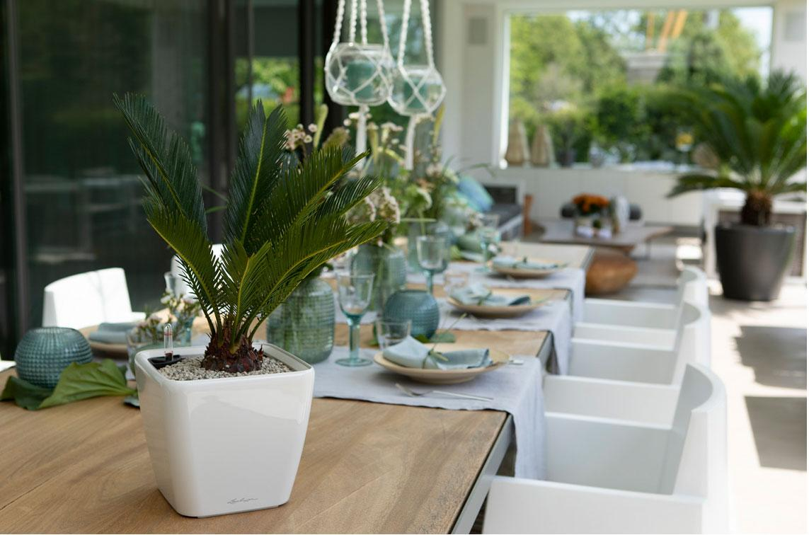 Белый QUADRO LS от LECHUZA с небольшой пальмой стоит на столе на крытой террасе.