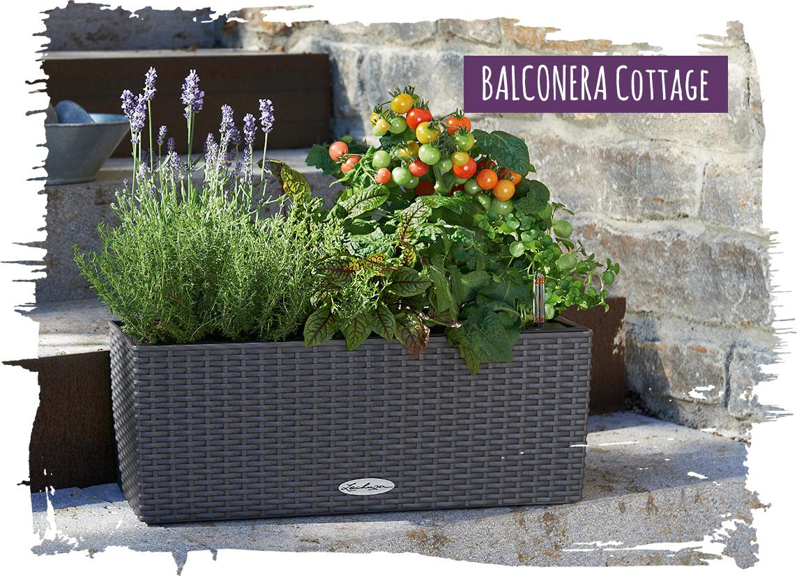 BALCONERA Cottage mit Kräutern und Gemüse