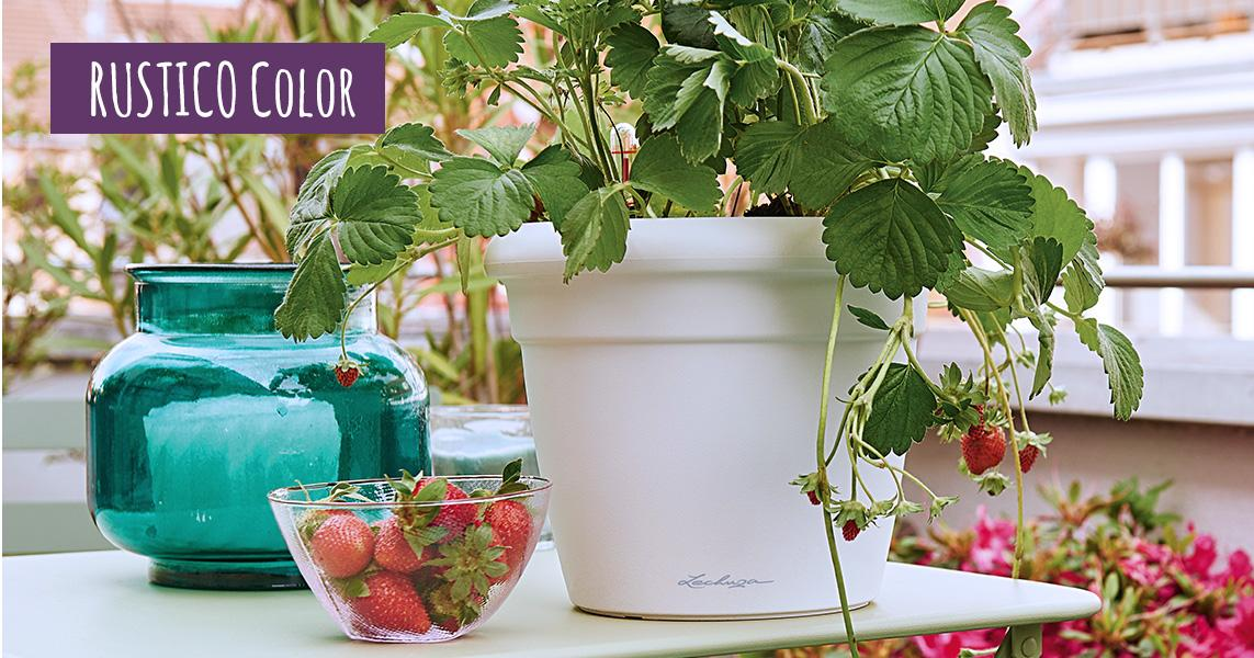 RUSTICO Color 21 mit Erdbeeren