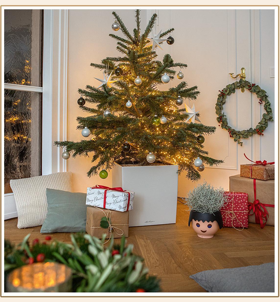 'Weihnachtsbaum bepflanzt in einem CUBE 40 in weiß