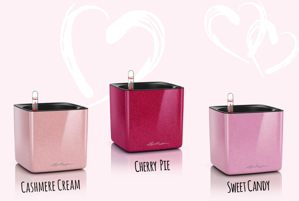 Glossy Kiss Collection