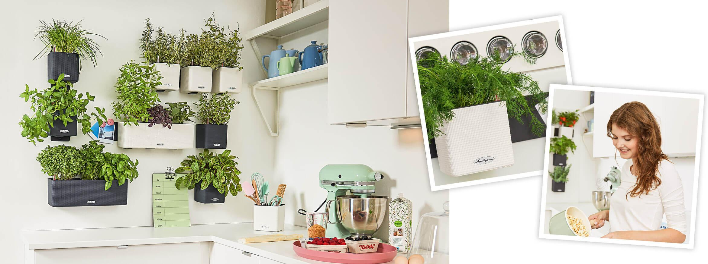 Planter Herbes Aromatiques Jardiniere un jardin d'herbes aromatiques dans votre cuisine !