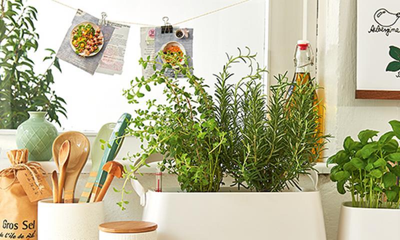 tw-herbs_navimage_de