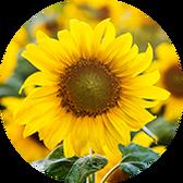 Как подготовить растения к вашему отпуску