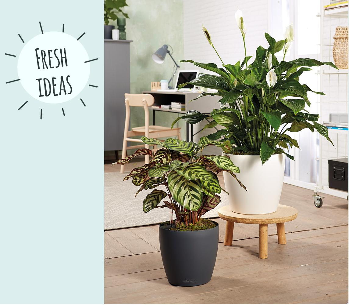 LECHUZA CLASSICO LS 35 planted with Spathiphyllum and Calathea