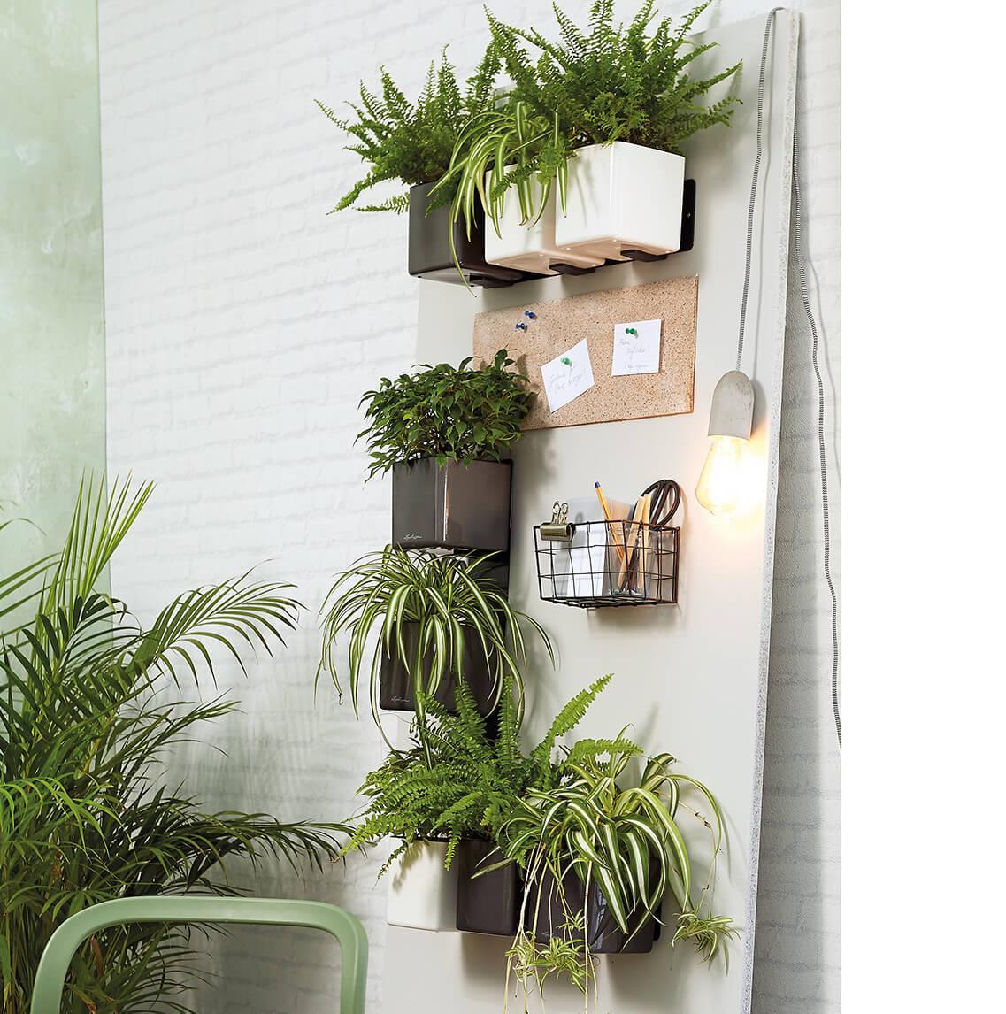 Verschillende Green Wall Kits hangen aan één muur samen met een pennenhouder en prikbord