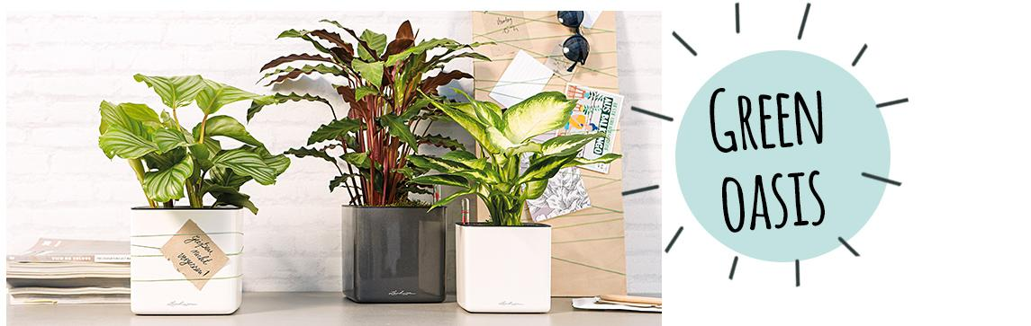 CUBE Glossy 14 are arranged on a sideboard with plants