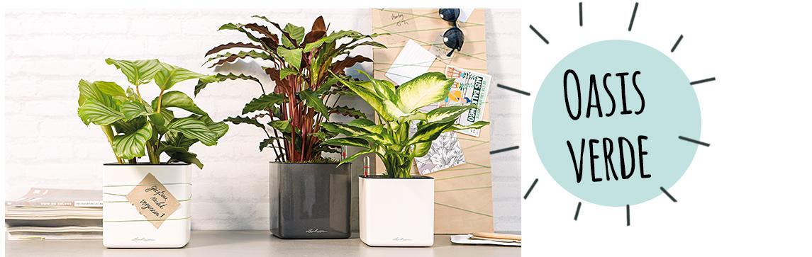 Los CUBE Glossy 14 están dispuestos en un aparador con plantas