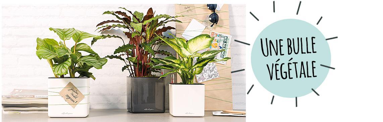 CUBE Glossy 14 sont disposés sur un buffet avec des plantes