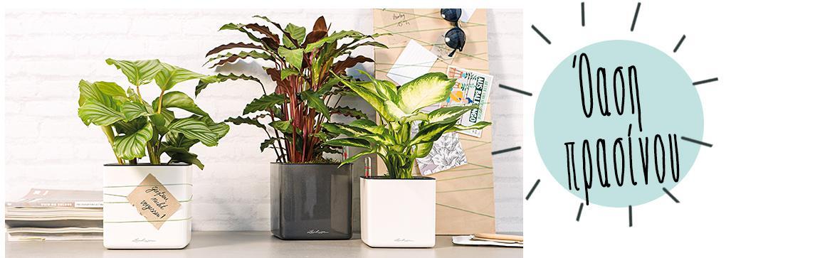 Το CUBE Glossy 14 είναι τοποθετημένο σε ένα μπουφέ με φυτά
