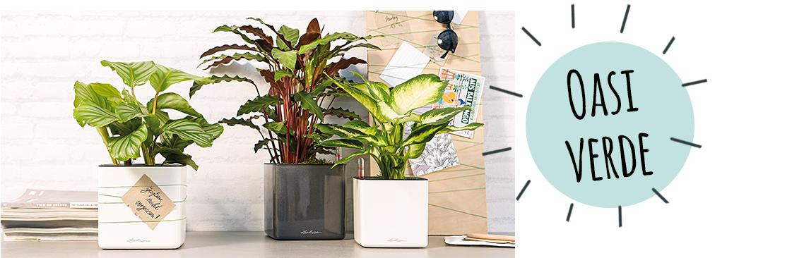CUBE Glossy 14 sono disposti su una credenza con piante