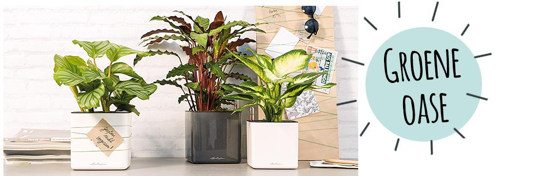 CUBE Glossy 14 staan op een dressoir met planten