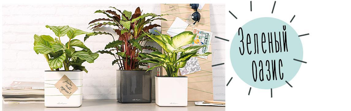 CUBE Glossy 14 расположены на буфете с растениями