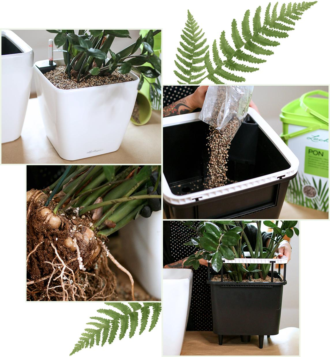 Geef uw planten de juiste pot