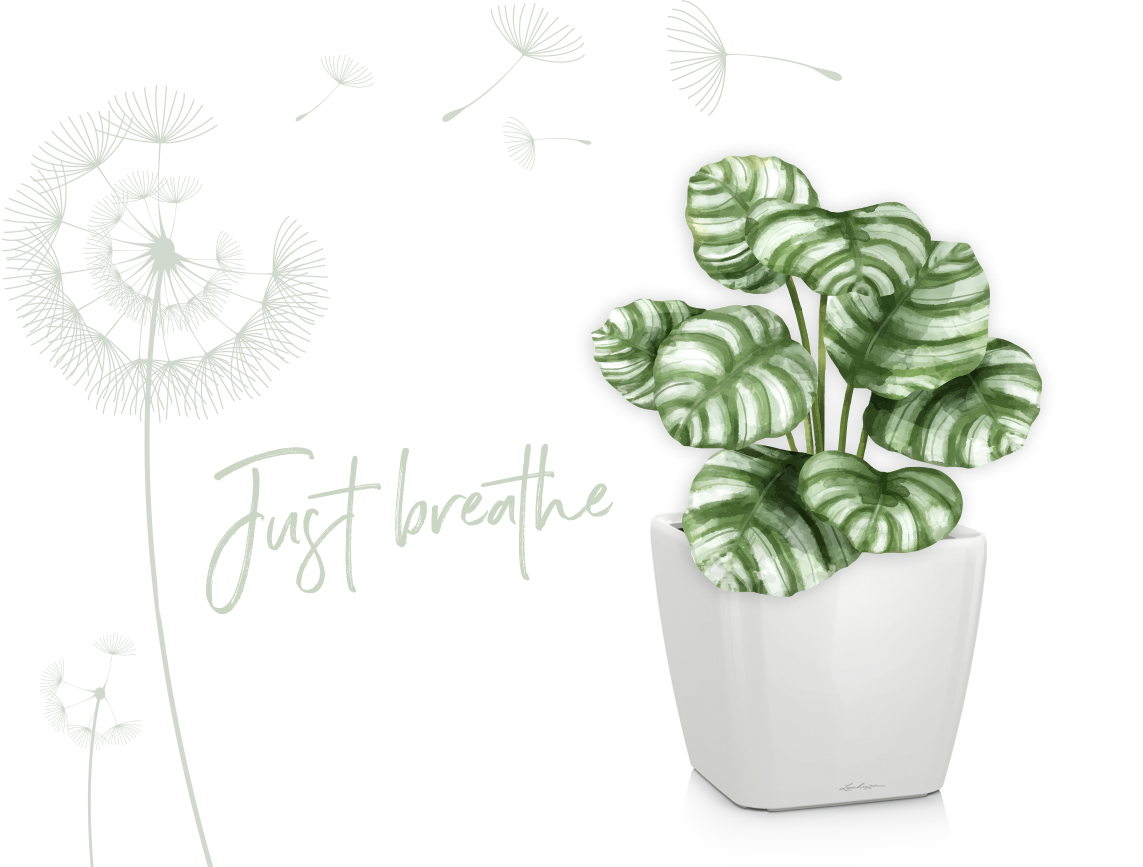 Le piante verde sono portatrici di benessere