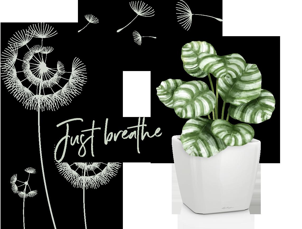 Groene planten zorgen voor een fantastisch binnenklimaat