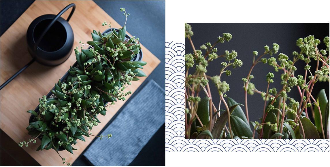 Küchenszene im Japandi-Style mit extravaganter Pflanze