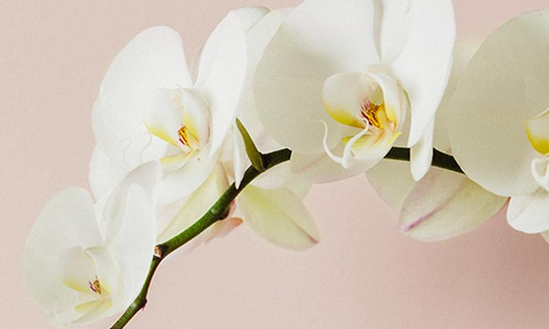 tw-orchid_navimage_de