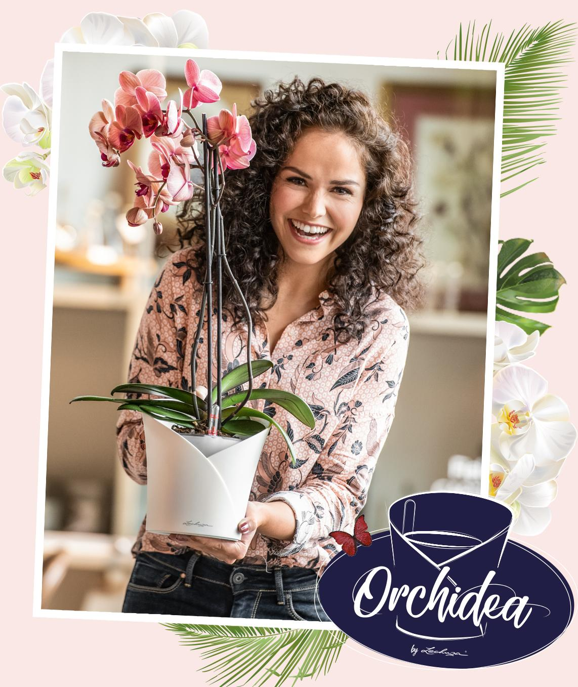 ORCHIDEA Le pot pour orchidées tout-en-un