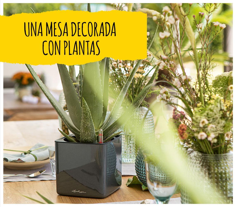 Sobre una mesa bien puesta puede verse una maceta CUBE Glossy de LECHUZA de color antracita con una planta de aloe vera.