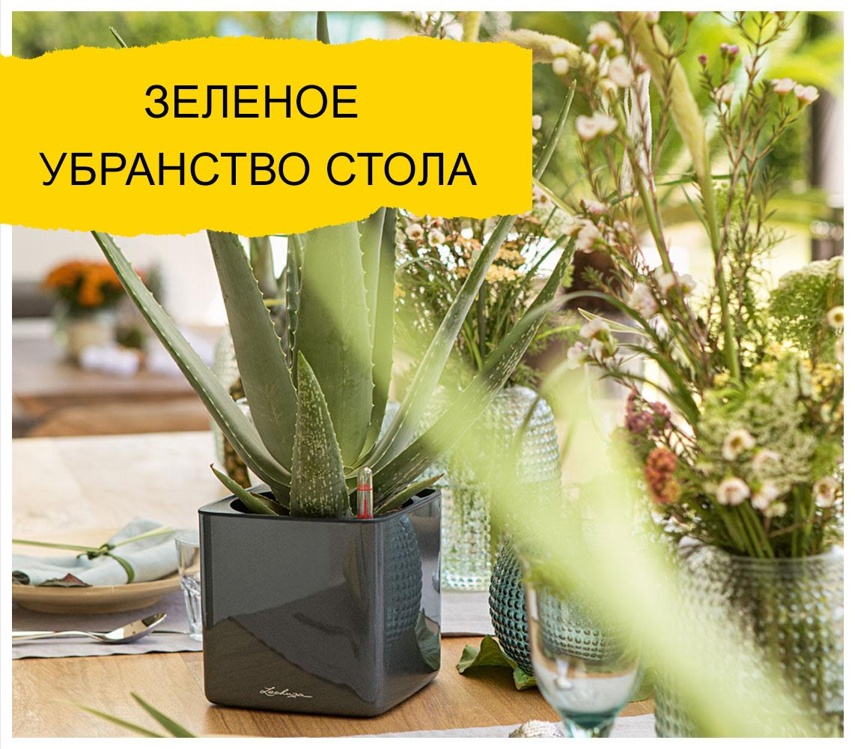 LECHUZA CUBE Glossy цвета антрацит с алоэ вера стоит на красиво накрытом столе.