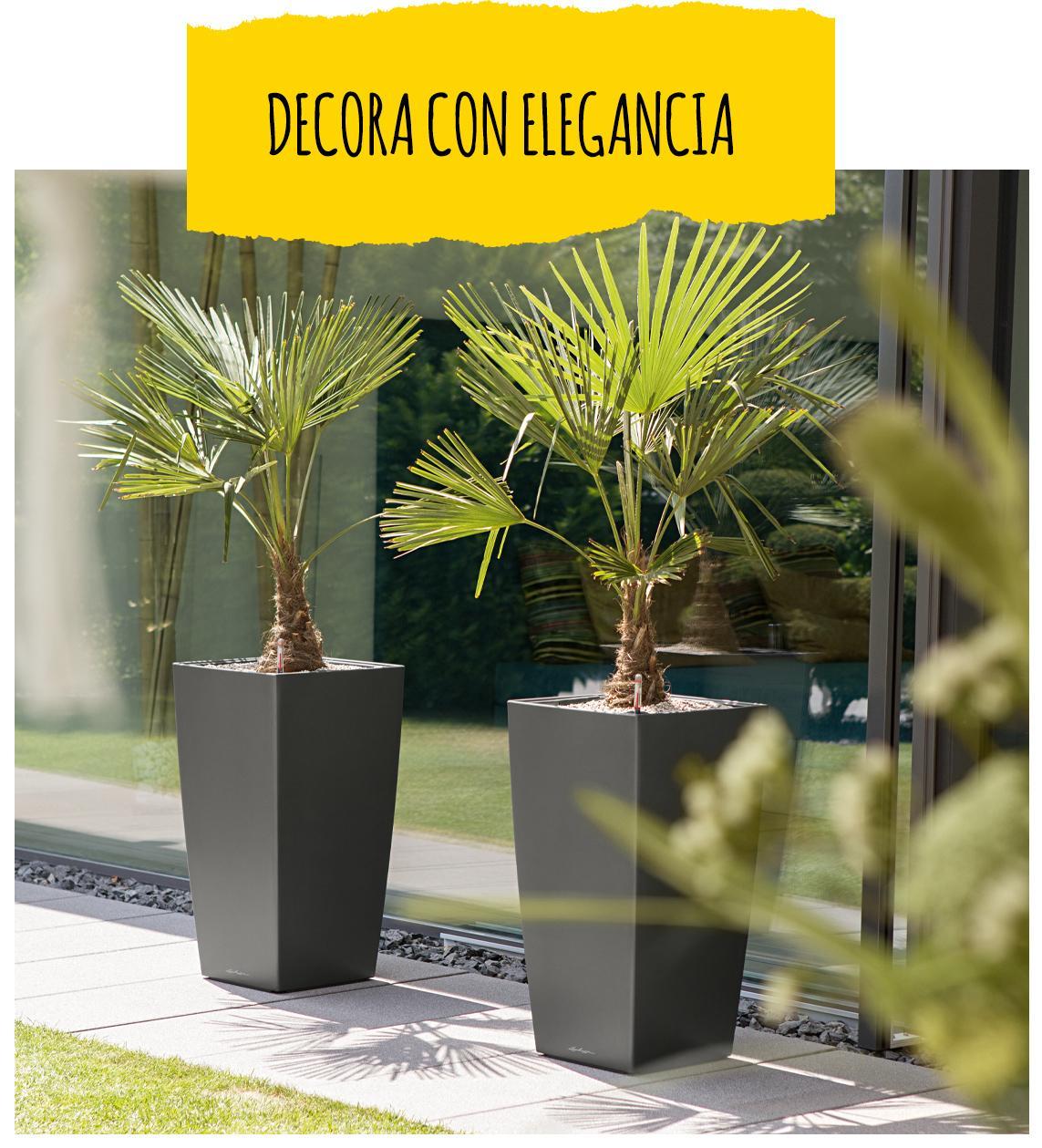 Dos CUBICO Premium de color antracita con una palmera cada una se encuentran al aire libre frente a un ventanal grande.