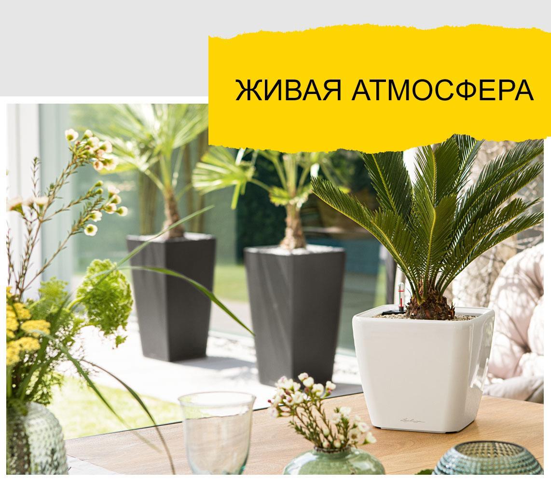 LECHUZA Quadro LS белого цвета с пальмой стоит на столе. На заднем плане два LECHUZA CUBICO цвета антрацит.