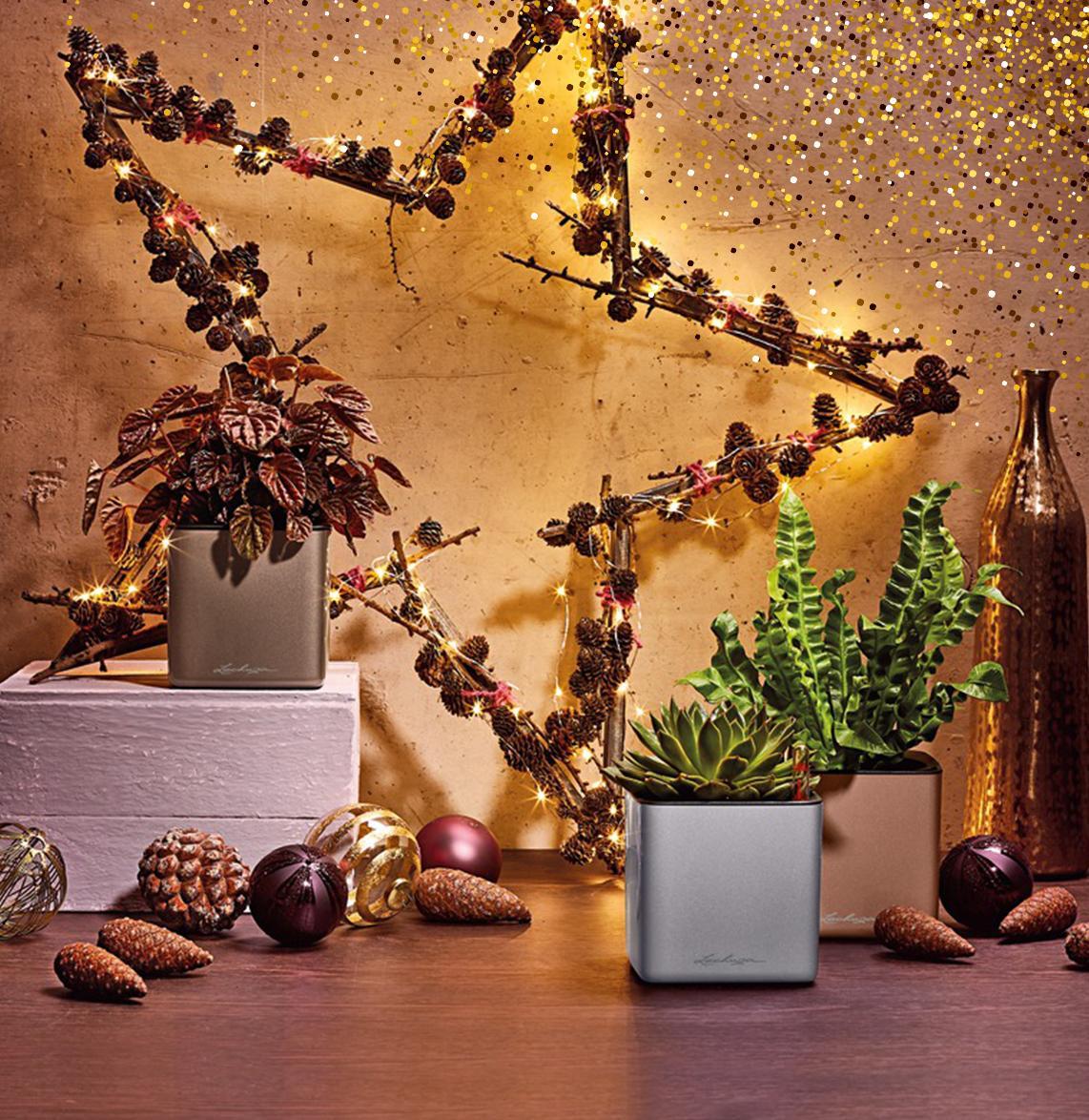 LECHUZA CUBE Glossy Winter Edition