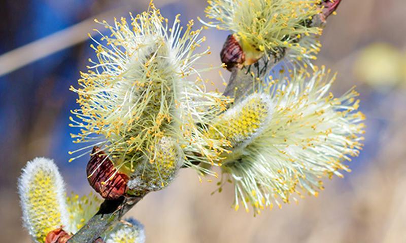 tw-spring-awakening_navimage
