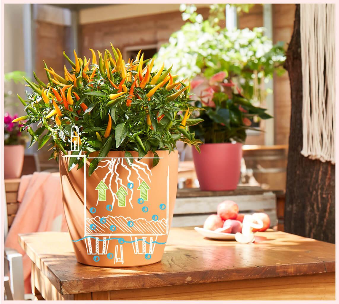 Exotic plants for garden design