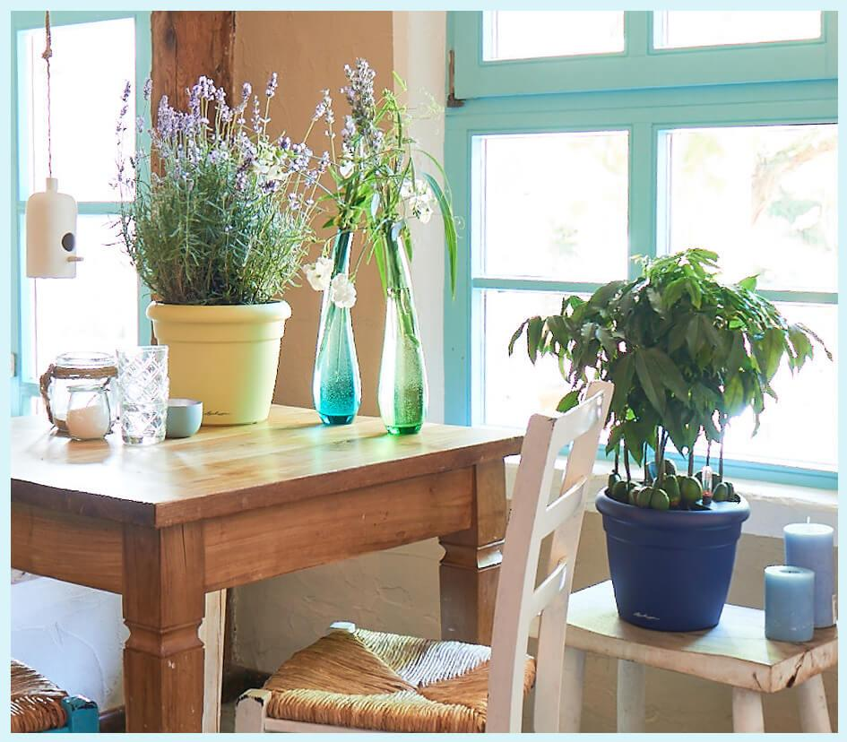 Classic planter in maritime colours