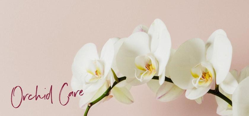 le_tw-uebersicht_orchideen